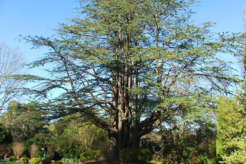 Sydney Tree Consultants